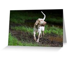 Orange & White Italian Spinone in Action Greeting Card