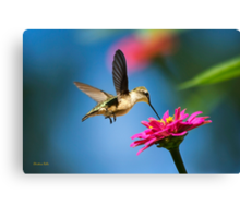 Art of Hummingbird Flight Canvas Print