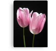 Two Pink Tulips Canvas Print