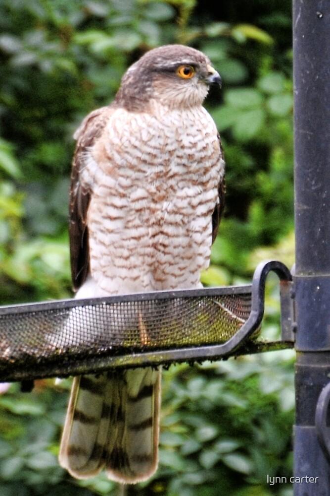 """No Bird Feeder Doesn't Mean I Feed You Birds"" by lynn carter"