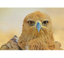 Tawny Eagle - Focus Intensity - African Wild Bird Background Photographic Print
