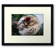 Ball of Feathers Framed Print