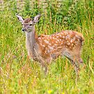 Red Deer Fawn by M.S. Photography/Art