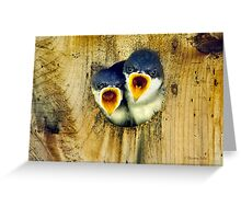 Two Tree Swallow Chicks Greeting Card