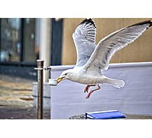 Black- Back Gull  Stealing China From A Nearby Cafe Photographic Print