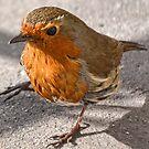 Robin Redbreast by lynn carter