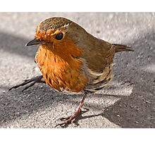 Robin Redbreast Photographic Print