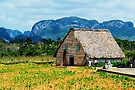 Tobacco House in Vinales by Yukondick