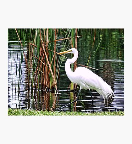 Expert Fisherman Photographic Print