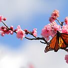 Spring On The Wing by CBoyle