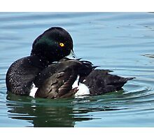 Tufted Duck Having A Wash n Brush Up Photographic Print