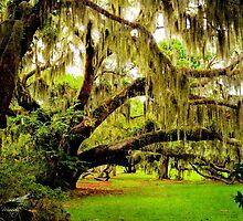 Plantation Oak by Miles Moody