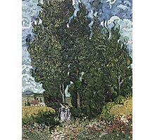 Vincent Van Gogh -  Cypresses 1898 Photographic Print