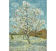 Vincent Van Gogh -  Pink Peach Tree  Photographic Print