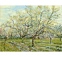 Vincent Van Gogh -  White Orchard, April 1888 - 1888  Photographic Print