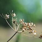 """"""" Golden Seed Heads """" by Richard Couchman"""
