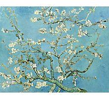 Vincent Van Gogh - Almond Blossom, February 1890 - 1890  Photographic Print