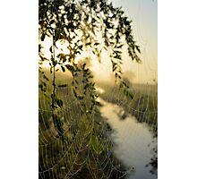 Natures Drapes Photographic Print