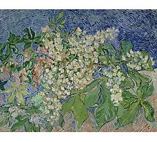 Vincent Van Gogh - Blossoming Chestnut Branches 1890 Photographic Print