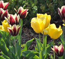 Tulips Together by ellokingdom