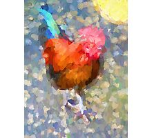 Rooster in the Sun Photographic Print