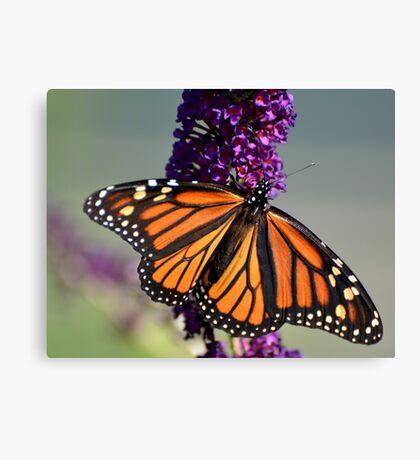 Wonderful Monarch Canvas Print