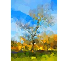 Winter Tree against a Blue Sky Photographic Print