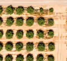 Almond crops Sticker