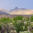 The Beauty of the Desert by Barbara Manis