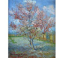 Vincent Van Gogh - Peach Tree In Bloom (In Memory Of Mauve), 1888 Photographic Print