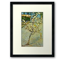 Vincent Van Gogh - Small Pear Tree In Blossom  Framed Print