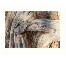 Old Canyon Tree Texture Art Print
