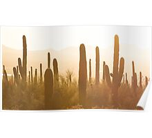 Amazing Sunset Image of Saguaro National Park Poster