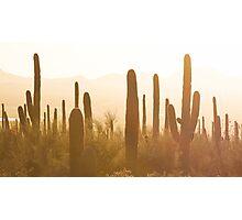 Amazing Sunset Image of Saguaro National Park Photographic Print