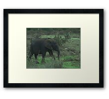 Young Elephant In Green Framed Print