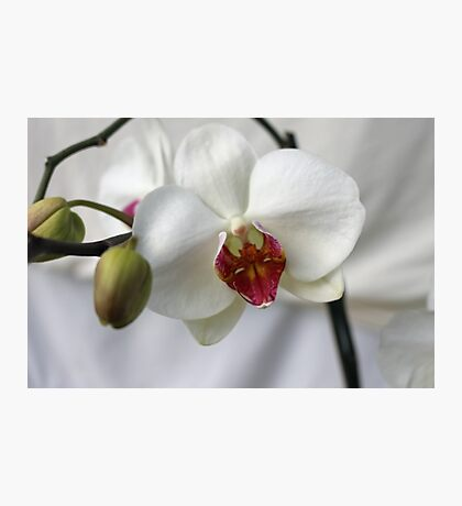 Orchid in wedding dress Photographic Print