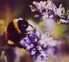 Bumblebee Macro by Indea Vanmerllin