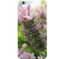 Italian Lavender iPhone Case/Skin