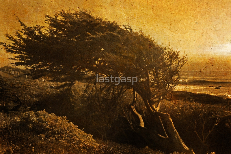 windswept gold by lastgasp