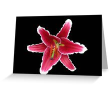 Stargazer Lily on Black Background Greeting Card
