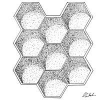 Honeycomb Photographic Print