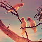 Long Billed Corellas by Lozzar Landscape