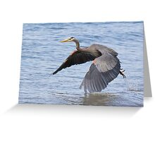 Great Blue Heron Launch Greeting Card