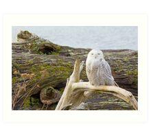 Snowy Owl Squint Art Print
