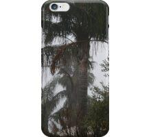 Palm trees in fog iPhone Case/Skin