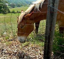 Grazing Brown Beauty    ^ by ctheworld