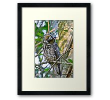 Curious Juvenile Long-eared Owl Framed Print