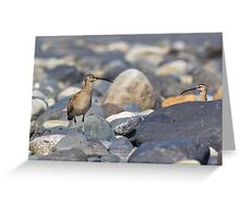 Peek-a-boo Whimbrel Greeting Card