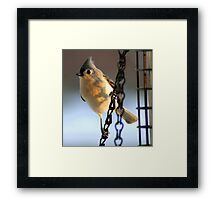 Morning Visitor....to my feeder! Framed Print