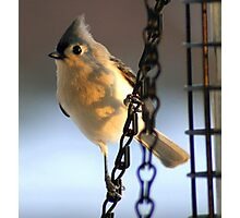 Morning Visitor....to my feeder! Photographic Print